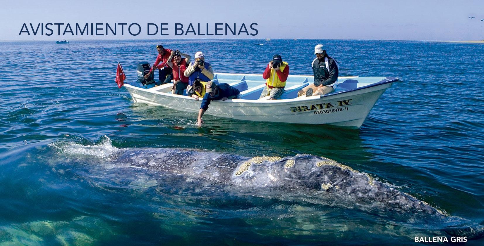 Avistamiento De Ballenas En Loreto Baja California