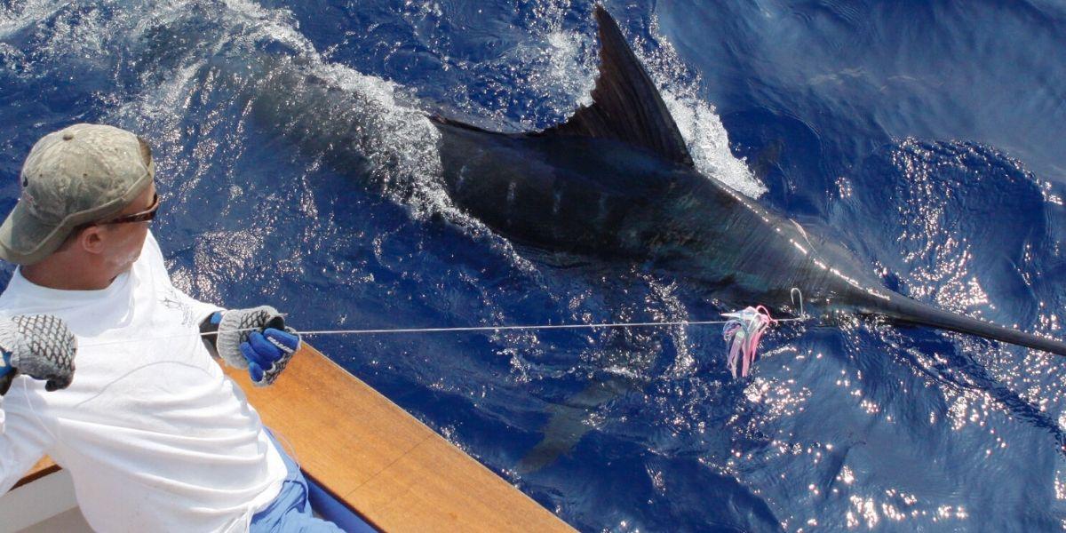 Pesca En Loreto Baja California Mexico Paquetes De Pesca