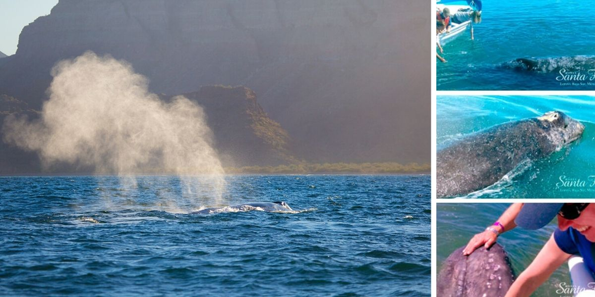 Guide To Whale Watching In Loreto Baja California