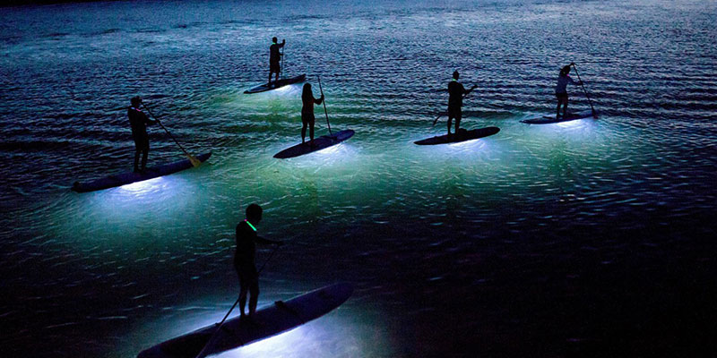 Led Paddle Boarding In Danzante Bay