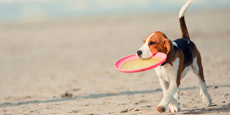 Travel To Loreto Mexico With Your Pet
