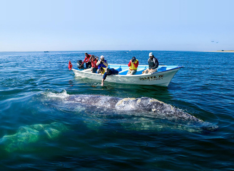 Villa Del Palmar Loreto Whale Watching