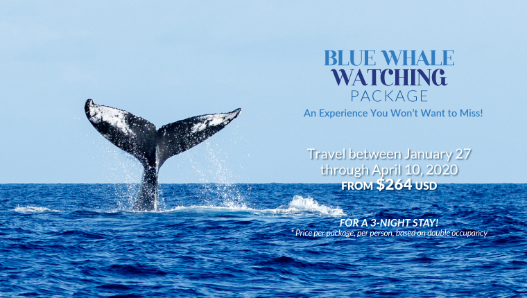 Blue Whale Watching Package
