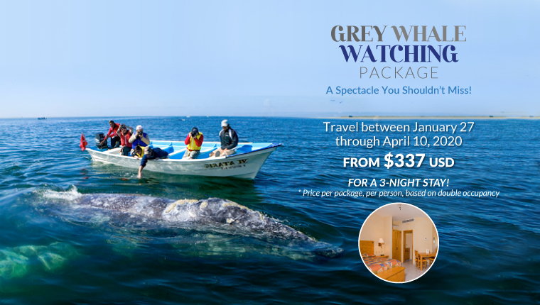 Grey Whale Watching Package